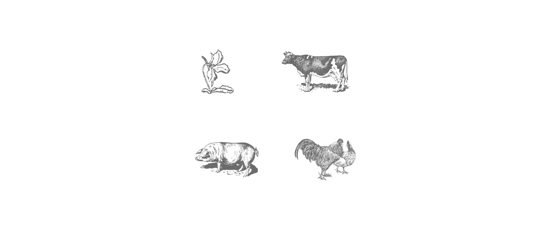 Trillium wood illustrations